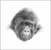 Gorilla Card - 10 Pack