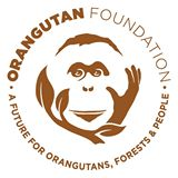 orangutan_foundation