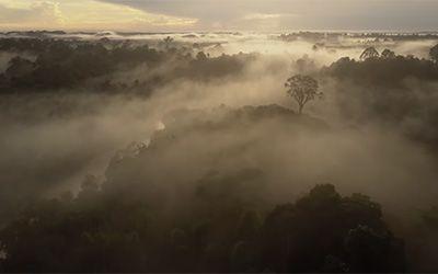 Last Stand for Leuser - Asia's Vanishing Eden