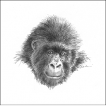 Gorilla Card - Single
