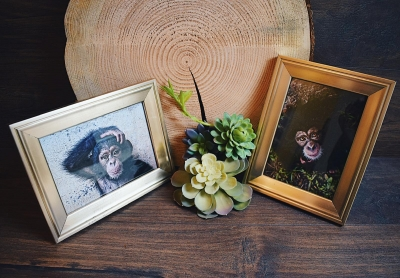 A Raffle for Liberia Chimpanzee Rescue & Protection