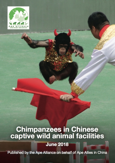 New Ape Alliance Report on Chimpanzees in Chinese Captive Wild Animal Facilities